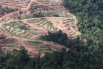 Deforestation for oil palm -- sabah_1069