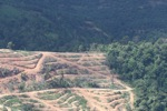 Deforestation for oil palm -- sabah_1071