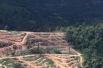 Deforestation for oil palm -- sabah_1072