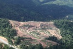 Deforestation for oil palm -- sabah_1073