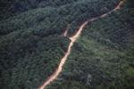 Oil palm plantation -- sabah_1077