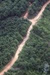 Oil palm plantation -- sabah_1080