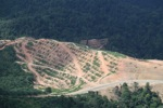 Deforestation for oil palm -- sabah_1081