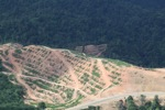 Deforestation for oil palm -- sabah_1082