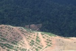 Deforestation for oil palm -- sabah_1083