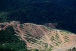 Deforestation for oil palm -- sabah_1084