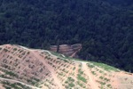 Deforestation for oil palm -- sabah_1086