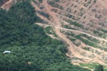 Deforestation for oil palm -- sabah_1087