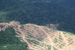 Deforestation for oil palm -- sabah_1088