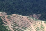 Deforestation for oil palm -- sabah_1089