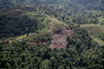 Deforestation for oil palm -- sabah_1090