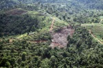 Deforestation for oil palm -- sabah_1091