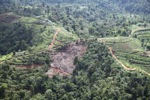 Deforestation for oil palm -- sabah_1092