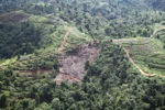 Deforestation for oil palm -- sabah_1093