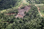 Deforestation for oil palm -- sabah_1094
