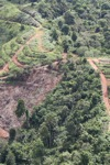 Deforestation for oil palm -- sabah_1095