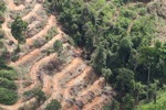 Deforestation for oil palm -- sabah_1096