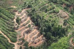 Deforestation for oil palm -- sabah_1097