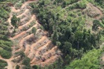 Deforestation for oil palm -- sabah_1098