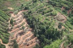Deforestation for oil palm -- sabah_1099