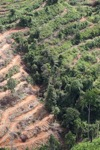 Deforestation for oil palm -- sabah_1100