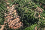 Deforestation for oil palm -- sabah_1101