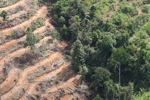 Deforestation for oil palm -- sabah_1102