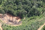 Deforestation for oil palm -- sabah_1103