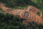 Deforestation for oil palm -- sabah_1105