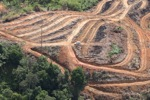 Deforestation for oil palm -- sabah_1106