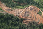 Deforestation for oil palm -- sabah_1107