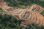 Deforestation for oil palm -- sabah_1108