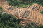 Deforestation for oil palm -- sabah_1109