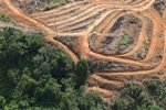 Deforestation for oil palm -- sabah_1110