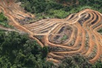 Deforestation for oil palm -- sabah_1111