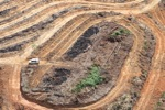 Deforestation for oil palm -- sabah_1112