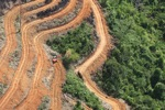 Deforestation for oil palm -- sabah_1113