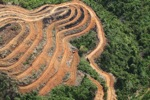 Deforestation for oil palm -- sabah_1115