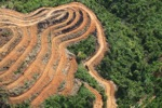 Deforestation for oil palm -- sabah_1116