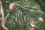 Deforestation for oil palm -- sabah_1117
