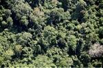 Borneo rainforest -- sabah_1119