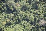 Borneo rainforest -- sabah_1120