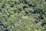 Borneo rainforest -- sabah_1131