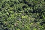 Borneo rainforest -- sabah_1132