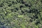 Borneo rainforest -- sabah_1133