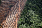 Deforestation for oil palm -- sabah_1138