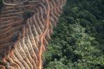 Deforestation for oil palm -- sabah_1139