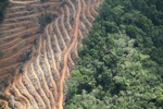 Deforestation for oil palm -- sabah_1141