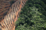 Deforestation for oil palm -- sabah_1143