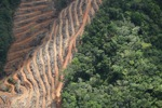 Deforestation for oil palm -- sabah_1145